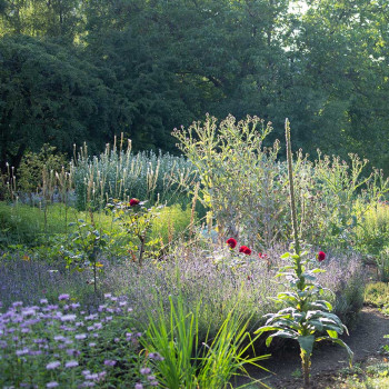 Guided tour of the medicinal herb garden. Lecture on Dr. Hauschka face care