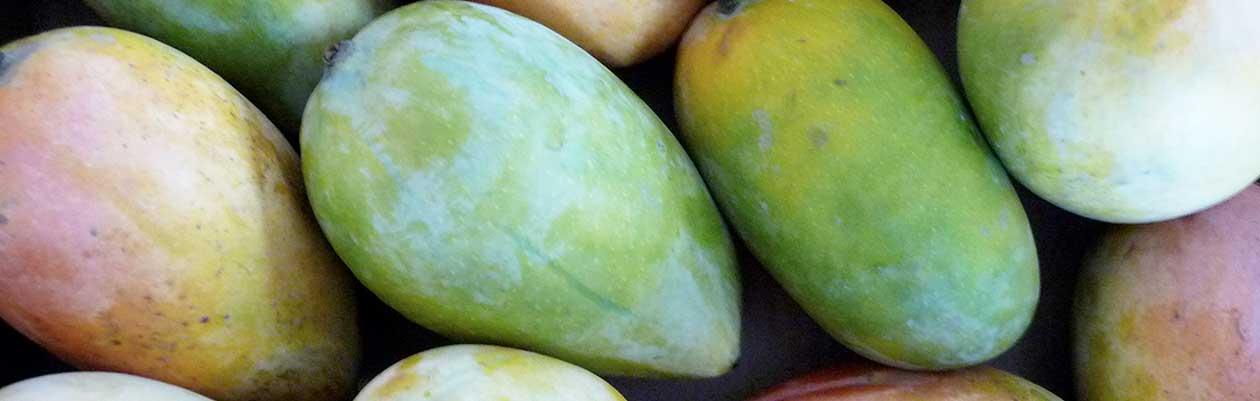 Jetzt mehr über unsere Mango-Anbaupartnerschaft erfahren