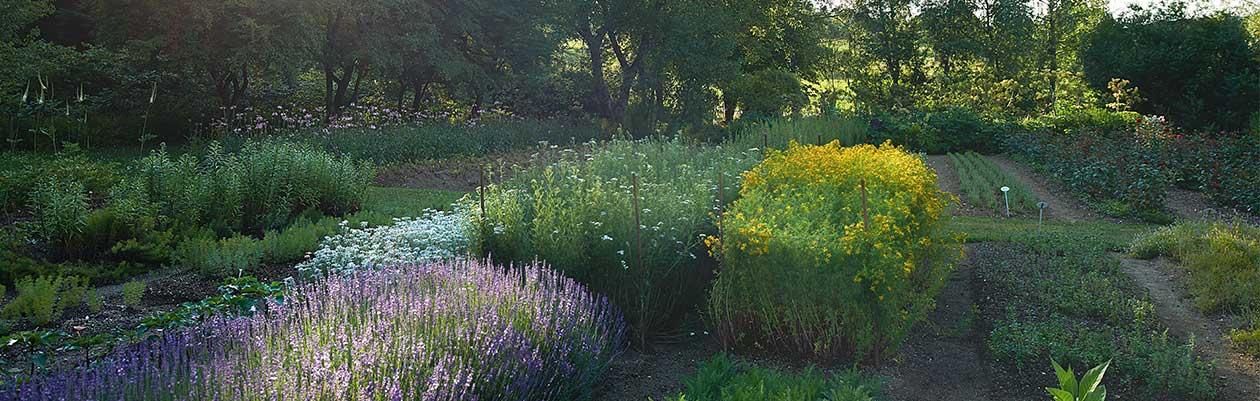 Our medicinal herb garden