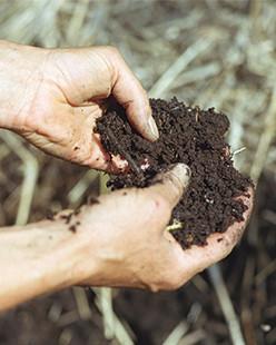 Dr.Hauschka medicinal herb garden: compost