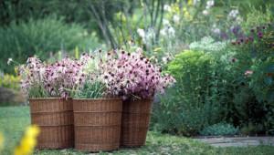 Dr. Hauschka medicinal herb garden