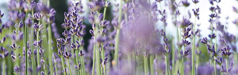 Dr.Hauschka Payment & shipping - Lavender