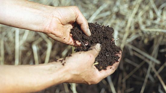 Dr.Hauschka Heilpflanzengarten: Kompost