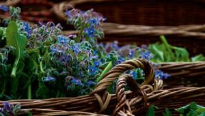 Dr. Hauschka Medicinal Plant Facts